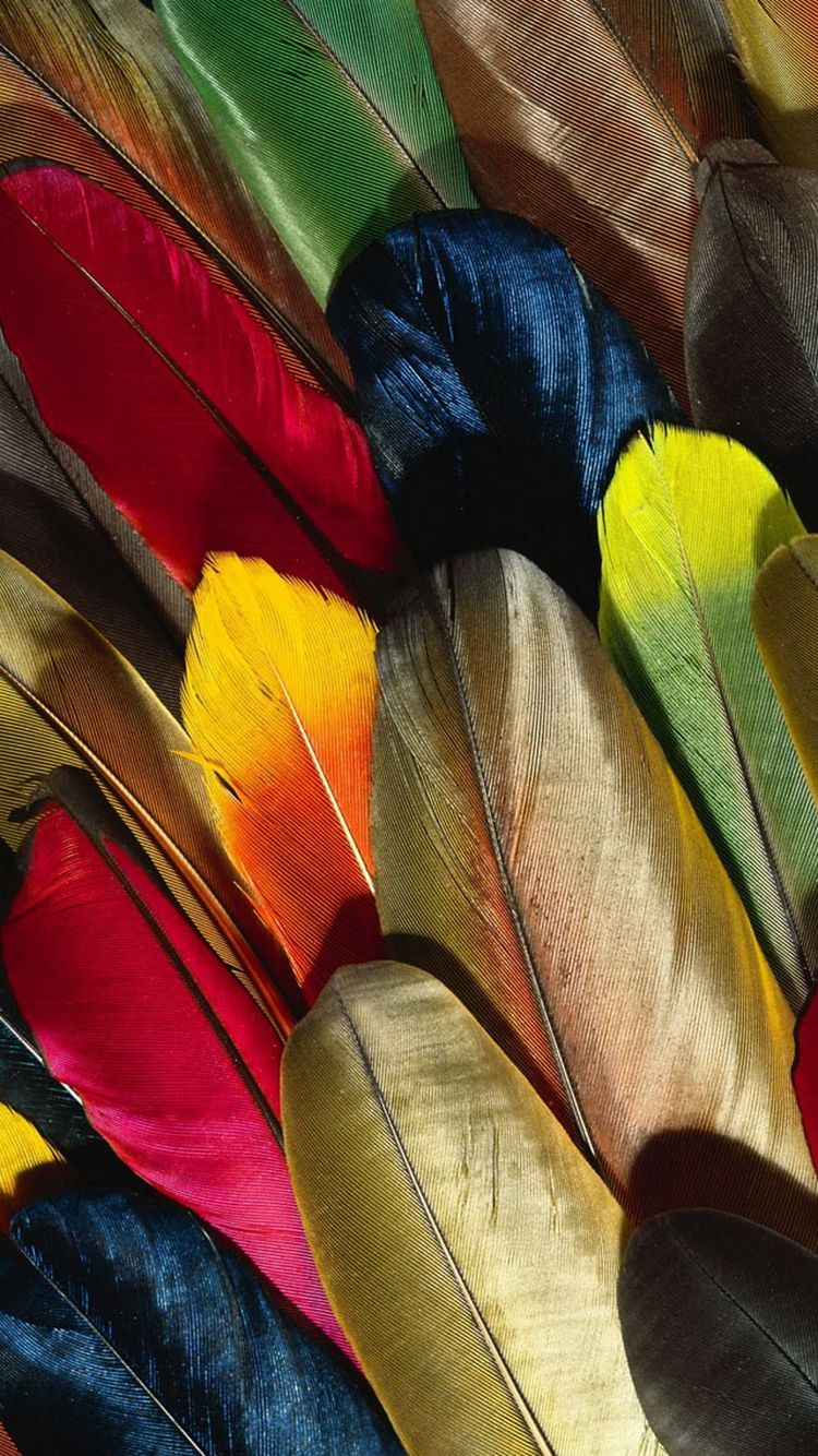 Colorful-Parrot-Feathers-iPhone-6-Wallpaper1.jpg